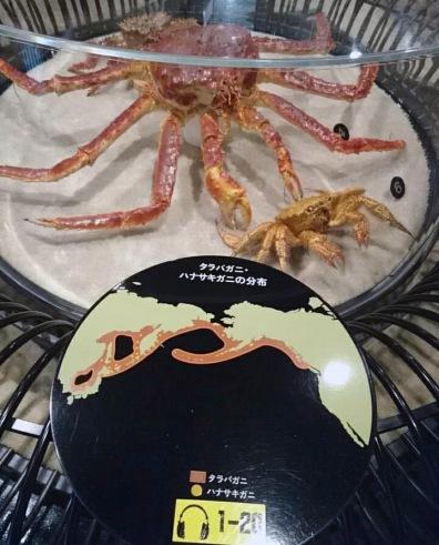 ハナサキ〜タラバぁ〜